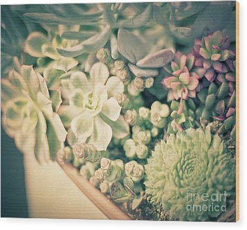 Wood Print featuring the photograph Succulent Garden by Ana V Ramirez