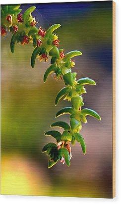 Succulent Hanging Wood Print