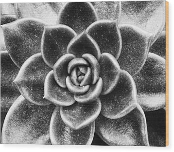 Succulent Symmetry Wood Print