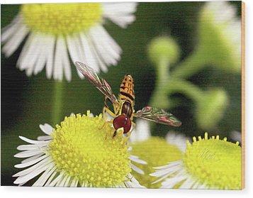Sugar Bee Wings Wood Print by Meta Gatschenberger