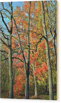 Wood Print featuring the photograph Sugar Maple Brilliance by Ray Mathis