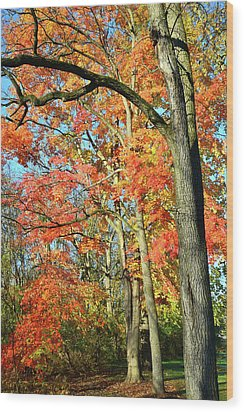 Wood Print featuring the photograph Sugar Maple Stand by Ray Mathis