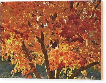 Wood Print featuring the photograph Sugar Maple Sunset by Ray Mathis