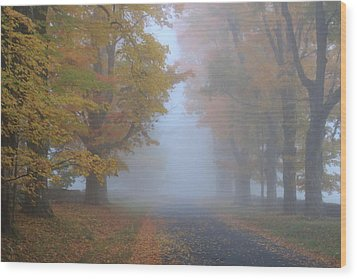 Sugar Maples On A Misty Country Road Wood Print by John Burk