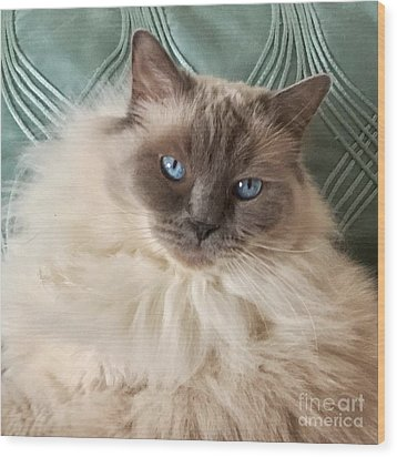 Sugar My Ragdoll Cat Wood Print