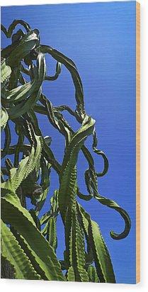 Sugar Pants Wood Print by Skip Hunt