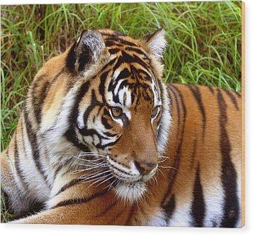Sumatran Tiger Wood Print by Tony Brown