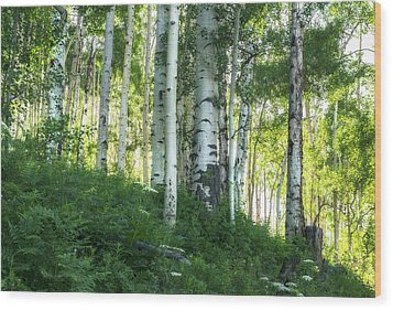 Wood Print featuring the photograph Summer Aspen Forest by Tim Reaves