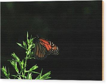 Summer Capture Wood Print by Karol Livote