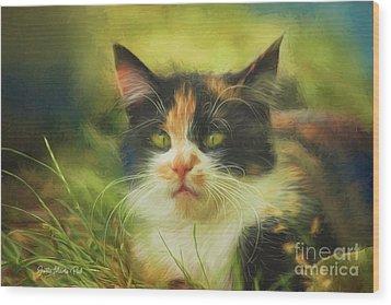 Wood Print featuring the photograph Summer Cat by Jutta Maria Pusl
