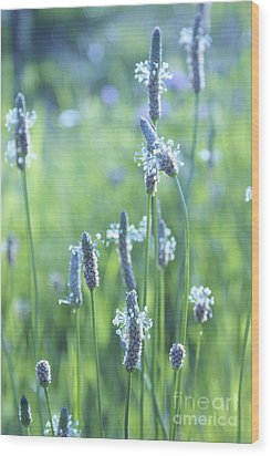 Summer Charm Wood Print by Aimelle