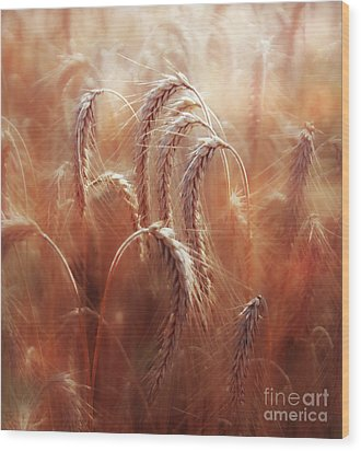 Summer Corn Wood Print by Agnieszka Mlicka