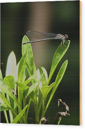 Wood Print featuring the photograph Summer Damselfly by Margie Avellino