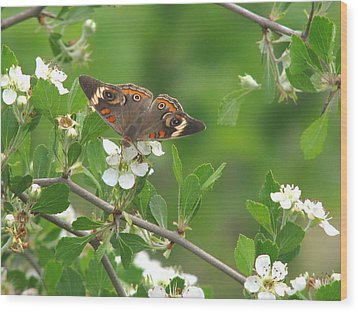 Wood Print featuring the photograph Summer Haw In Spring by Peg Urban