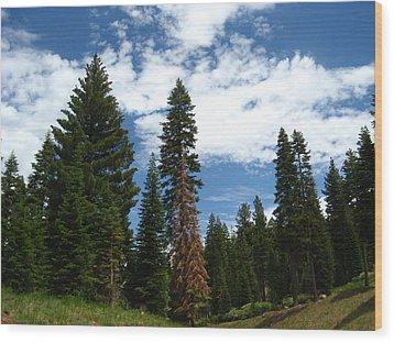 Summer Hike Wood Print