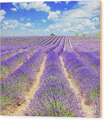 Summer In Provence Wood Print by Anastasy Yarmolovich