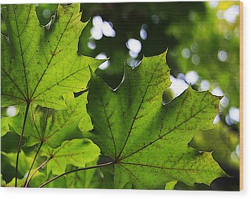Summer Maple Leaves Wood Print by Joanne Coyle