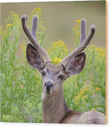 Summer Mule Deer Wood Print
