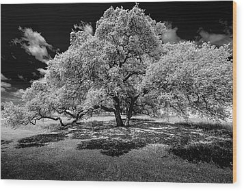Wood Print featuring the photograph A Summer's Night by Darryl Dalton