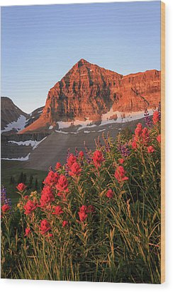 Wood Print featuring the photograph Summer Wildflowers On Timpanogos. by Johnny Adolphson