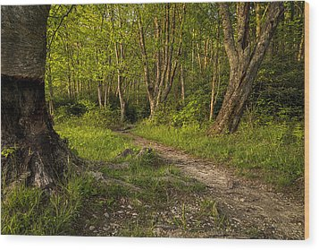 Price Lake Trail - Blue Ridge Parkway Wood Print
