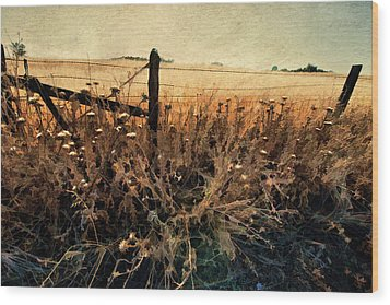 Summertime Country Fence Wood Print
