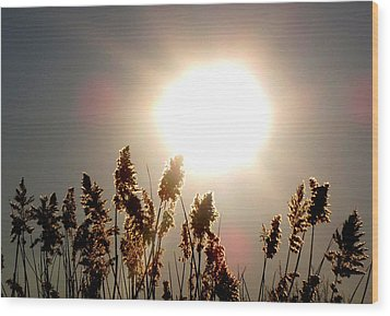 Sun And Grass 2  Wood Print by Lyle Crump