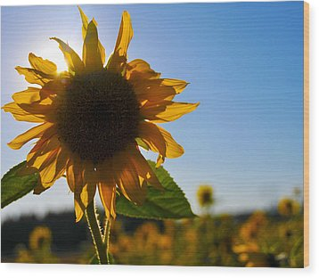 Sun And Sunflower Wood Print