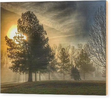 Sun And Trees Wood Print by Sumoflam Photography
