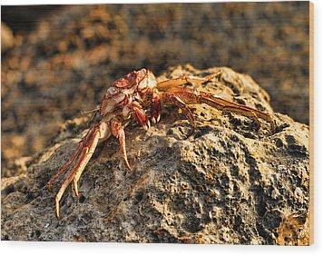 Sun-baked Spider Crab Wood Print