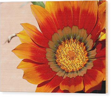 Sun Bloom Of Fire Wood Print by Edan Chapman