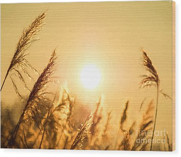 Sun Wood Print by Daniel Heine