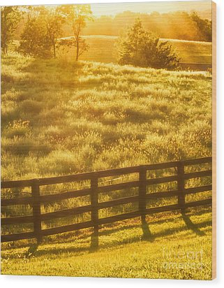 Sun-drenched Pasture Wood Print by Mark Miller