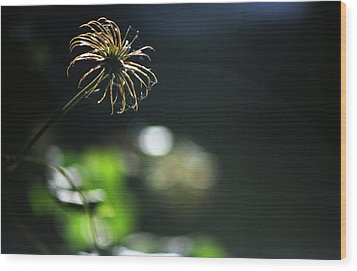 Wood Print featuring the photograph Sun Fire by Wanda Brandon