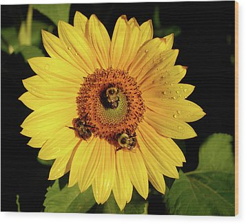 Sunflower And Bees Wood Print
