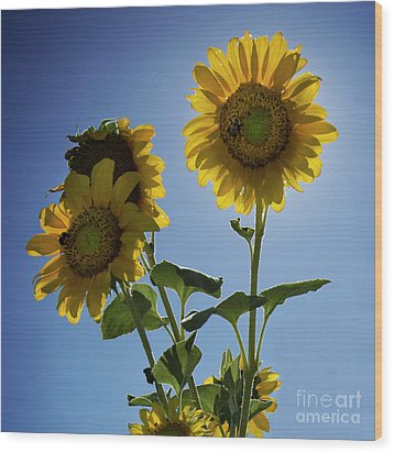 Wood Print featuring the photograph Sun Flowers by Brian Jones
