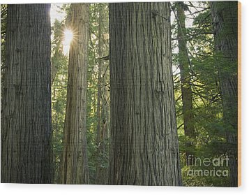Sun In The Cedars Wood Print by Idaho Scenic Images Linda Lantzy