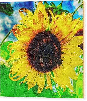 Wood Print featuring the photograph Sun by Jame Hayes
