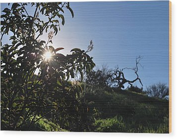 Wood Print featuring the photograph Sun Shines Through The Greenery by Matt Harang