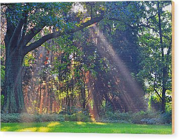 Sun Shower B Wood Print by Peter  McIntosh
