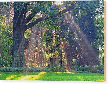 Sun Shower C Wood Print by Peter  McIntosh