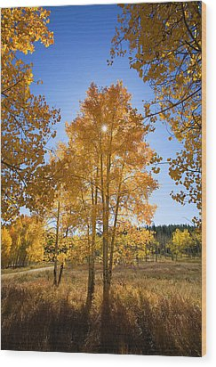Sun Through Aspens Wood Print by Ron Dahlquist - Printscapes