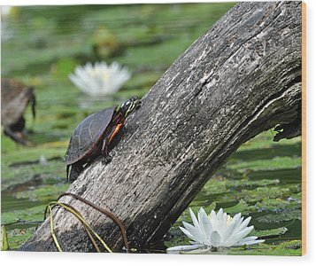 Wood Print featuring the photograph Turtle Sunbathing by Glenn Gordon