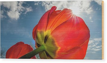 Wood Print featuring the photograph Sunbeams And Tulips by Adam Romanowicz