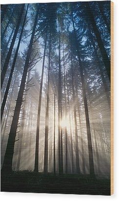 Sunburst In The Forest Wood Print by Greg Vaughn - Printscapes