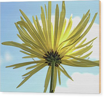 Wood Print featuring the photograph Sunburst by Judy Vincent
