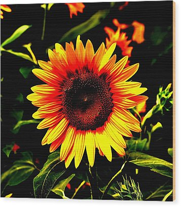 Sunburst Of The Sunflower Wood Print by Marc Mesa