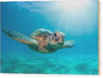 Sunburst Sea Turtle Wood Print
