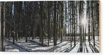 Sundial Forest Wood Print by Brad Allen Fine Art