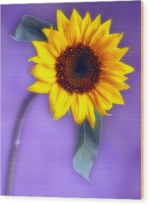 Sunflower 1 Wood Print by Joseph Gerges